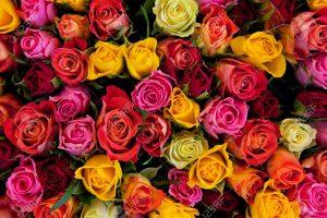 significato dei fiori