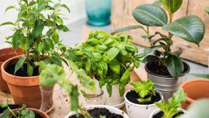 come fare un orto da balcone
